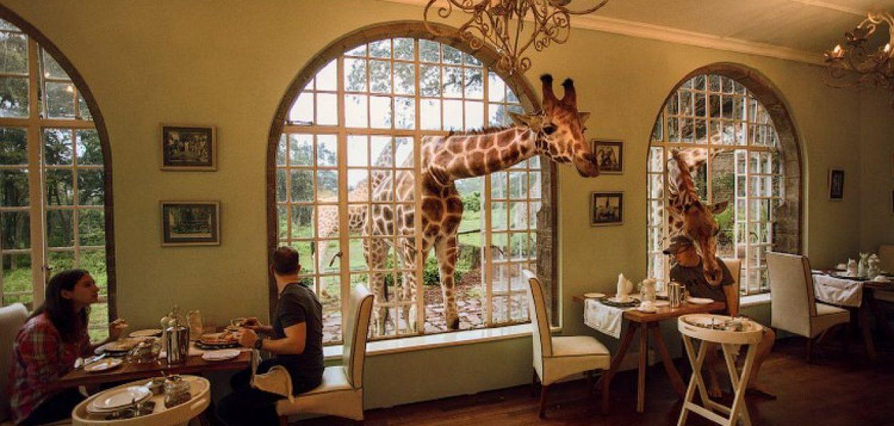 Goście tego hotelu jedzą śniadanie z żyrafami
