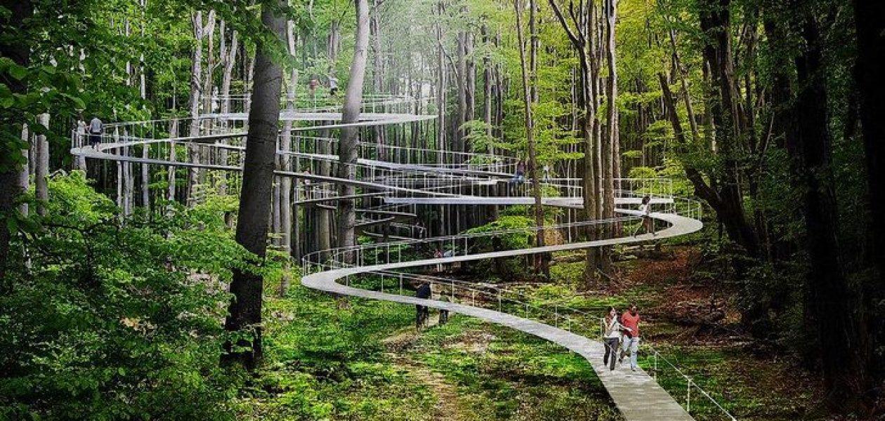 W Turcji powstanie park ze ścieżkami między wierzchołkami drzew