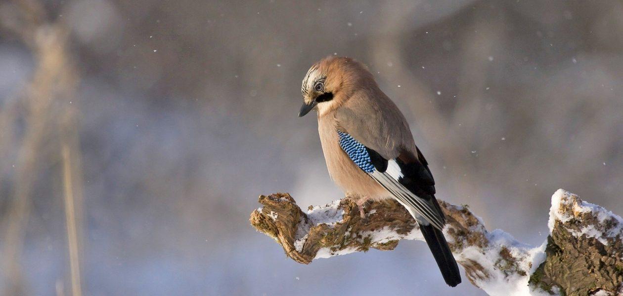 Poznaniacy nie zapominają zimą o zwierzętach