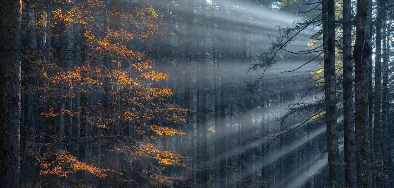 Czasami warto spojrzeć w górę. Piękno włoskiego lasu.