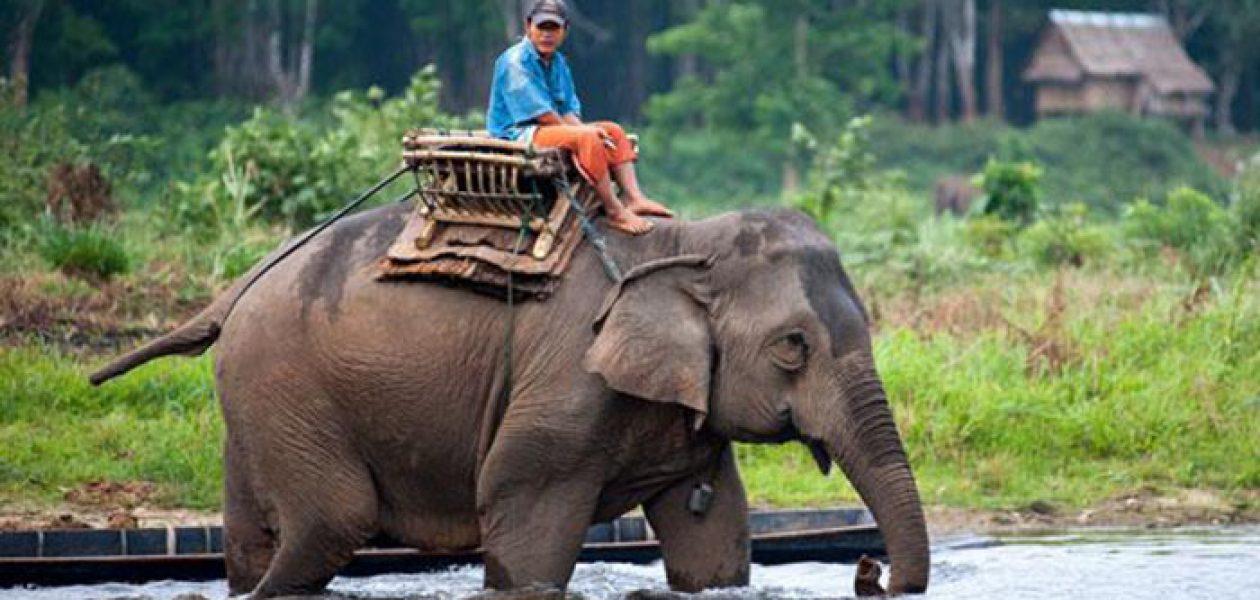 Zakaz jazdy na słoniach od w Kambodży w Angkor Wat od 2020 roku